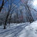 言葉にならないくらい美しい樹氷。