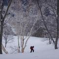 ダケカンバの樹氷、数センチの新雪があった。