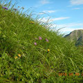 お花畑から聖岳がちらり。