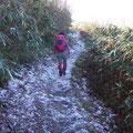 朝はよく冷えたので霜柱を踏んで歩きました。