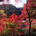 高尾山の紅葉。