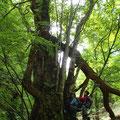 桂はいつからこの森に住んでいるのでしょう?