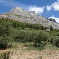 Depuis les oliveraies sous le Refuge Cézanne