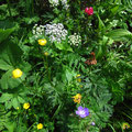De belles fleurs en ce moment dans la montagne de Foilly