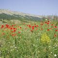 lieblich zwischen Pescocostanzo und Sulmona