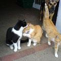 Hofkatzen mit Hund