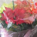 *可愛い赤いポインセチア花鉢。