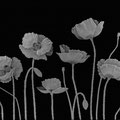 'poppies' intaglio engraved. optical crystal. 20x15x2.5cms glass engraving