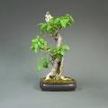 Flieder, Syringa vulgaris, Bonsai-Solitär, bonsai-hassler