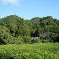 陶房から見る北側の風景