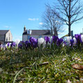Crocuses on the square © Jeremy Evans