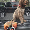Agnes with a limit of pheasants.