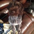 Agnes as a puppy.