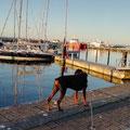 """Frühmorgendlicher """"Kontrollgang"""" im Stadthafen"""