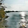 Hier kann man toll surfen lernen mit seinem Hund – Flachwasser | großer Bodden bei Lietzow