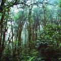 Costa Rica bosque nuboso