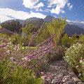 Hotel Garden (Urubamba Valley, Peru)