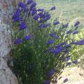 Flores en rocas
