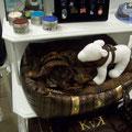 Koko Von N. tienda para mascotas posh
