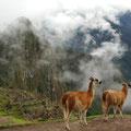 Cusco bello