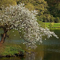 Flores de primavera en UK