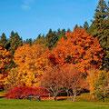 bellezas del otoño