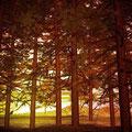 Otoño y bosque