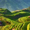 Campos de arroz China