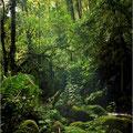 Parque Nacional Barinas Venezuela