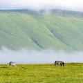 Ngorongoro Africa