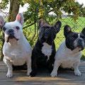 Lilly, Betty und Lola