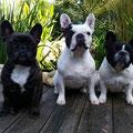 Betty, Lilly und Lola
