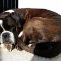 Benny genießt die letzten Sonnenstrahlen