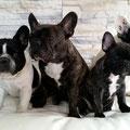 Lola, Betty, Paula und Lilly