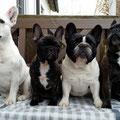 Lilly, Paula, Lola und Betty