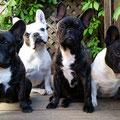 Betty, Lilly, Paula und Lola
