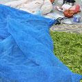 摘んだ茶葉は、乾燥しすぎないように覆いをかけて広げておきます