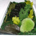 Cadre avec végétaux stabilisés - Feuille de chêne vert citron