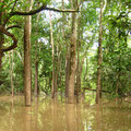Der ueberflutete Wald