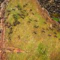 die Ameisen waren plötzlich überall!!!