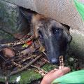 Suzy, der Hund der Nachbarn