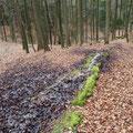 Steinerne Rinne Buchenberg, Aufnahme 2016 (viel Laub und Erde ... besorgniserregend)