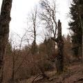 Unsere Tour führte am Naturschutzgebiet Hinterhaslach vorbei