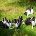 von links: Gwendy, Abby, Fly, G.P, Devil  hinten: Madison, Bailey (alias Charly Chaplin of Angel´s Beauty)