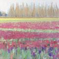 Tulips 20x20 $525