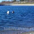 24 de diciembre de 2011. Patos buscando comida