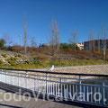 24 de diciembre de 2011. Gaviota en el Parque de Valdebernardo
