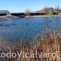 24 de diciembre de 2011. Patos en el lago