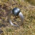 """Ring aus <a href=""""./glossar/"""" >rhodiniertem</a> Silber mit einer """"eingespannten"""" grau-schwarzen<a href=""""./glossar/"""" >Tahitiperle</a>"""