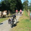 Passage d'un troupeau de 40 vaches